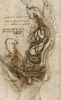 Leonardo da Vinci, Coition of Hemisected Man and Woman