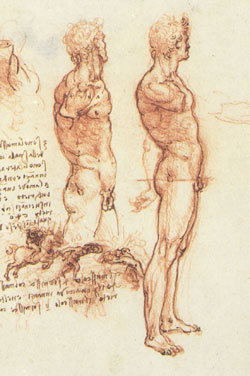 Leonardo da Vinci, Anatomy of a Male Nude